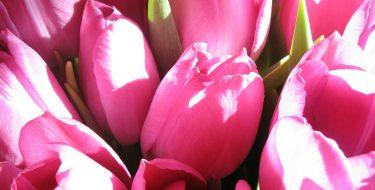 Wysyłka kwiatów – jak to działa?