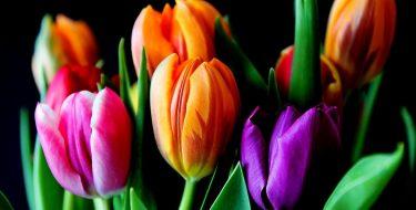 Wysyłka kwiatów- pomysł na prezent