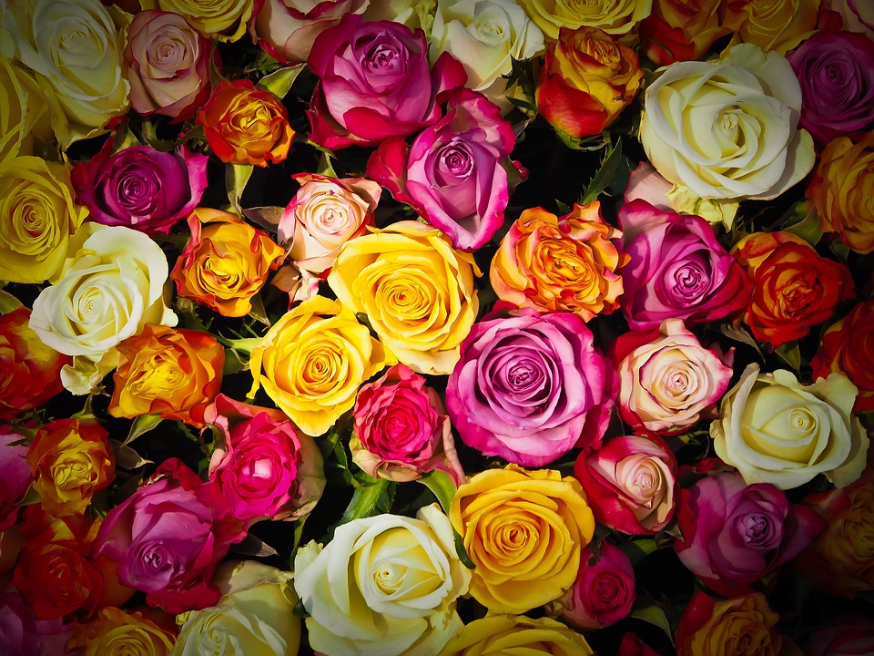 Kwiaty w drodze